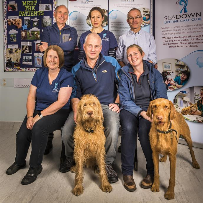 The Veterinary Surgeons